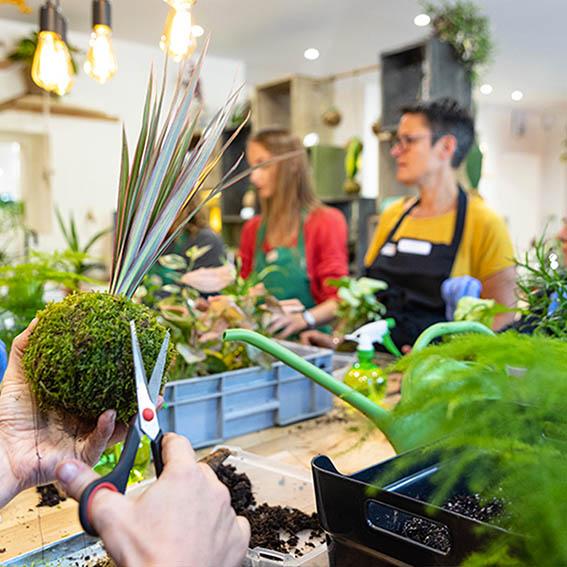 Les ateliers de radis et capucine 2 - Click and collect Angers